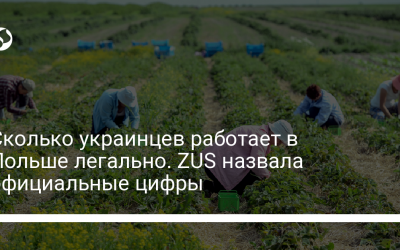 Сколько украинцев работает в Польше легально. ZUS назвала официальные цифры